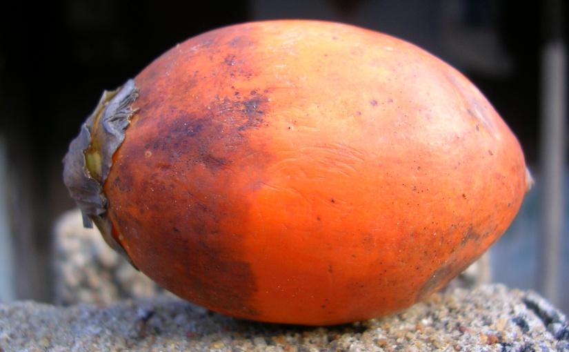 Growing Betel Nuts In andOutdoors
