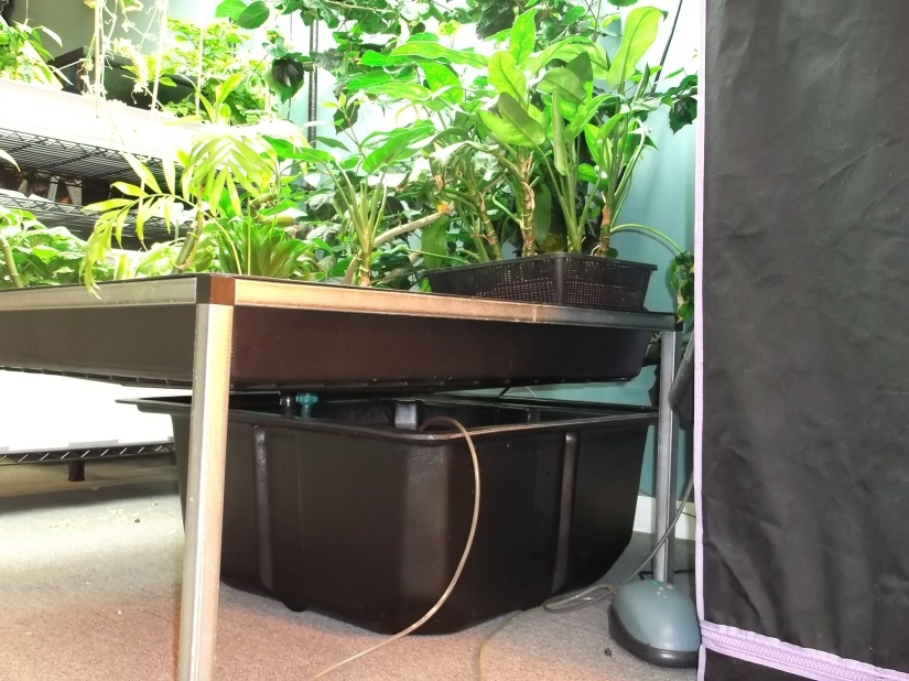 Ebb and FlowHydroponics